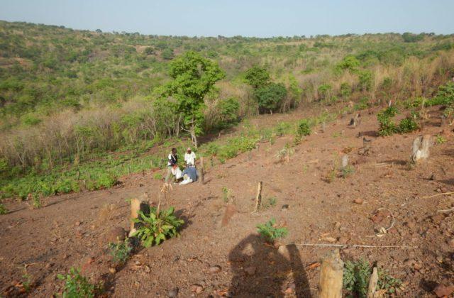 DSCN0632 (Mali)