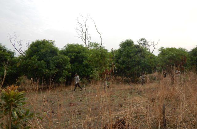 DSCN0726 (Mali)